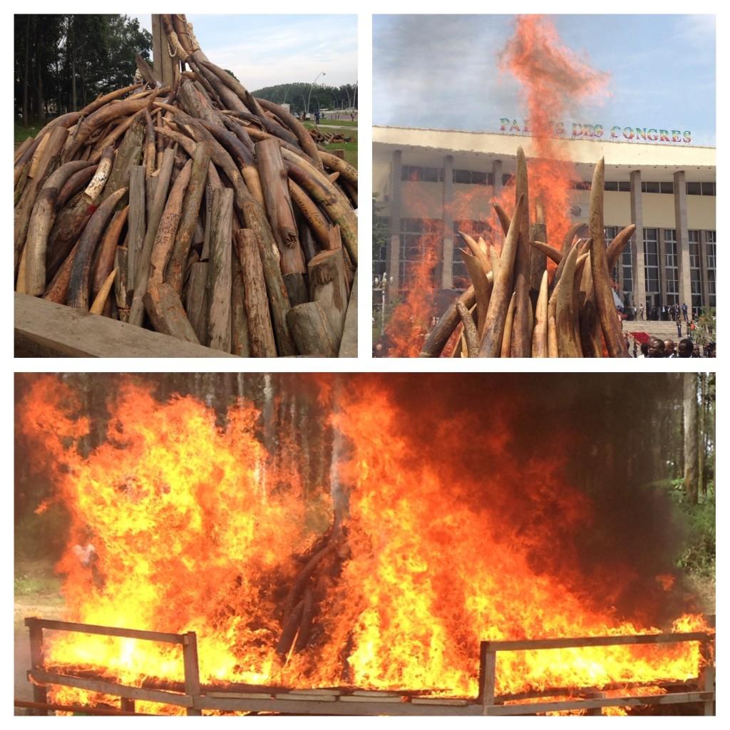 Ivory burn in Brazzaville