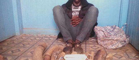 1 individu arrêté avec 9 ivoires à POKOLA