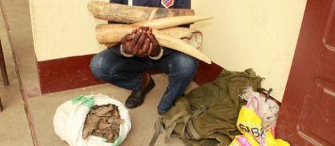 Deux trafiquants appréhendés à Brazzaville