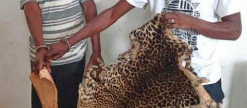 Comparution de deux trafiquants de produits de faune a pointe noire